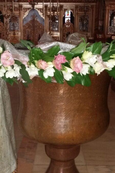 Cristelnita din Frezia si lisianhus